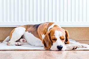 dog sleeping in front of radiator